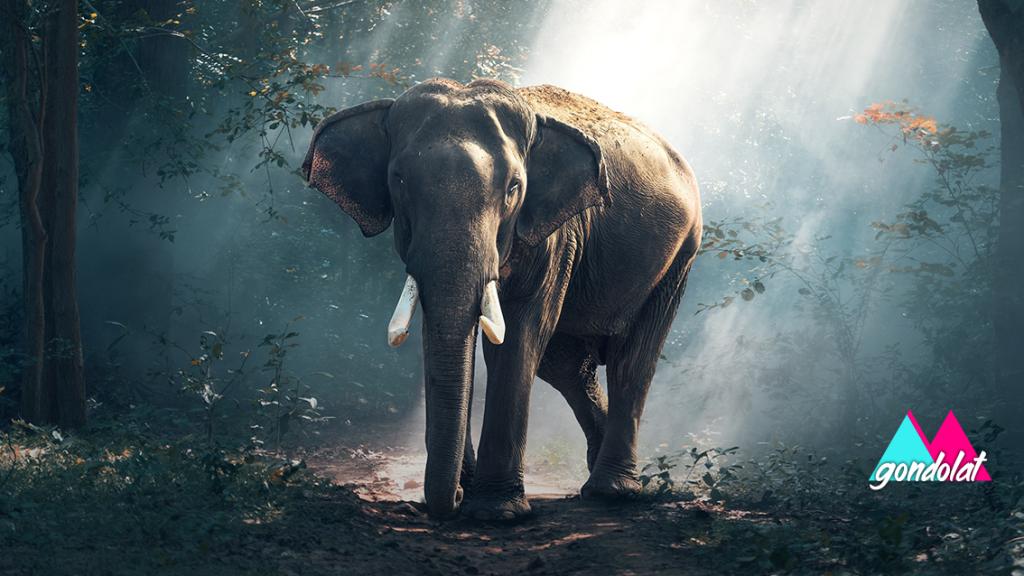 elefant-ananasz-petarda